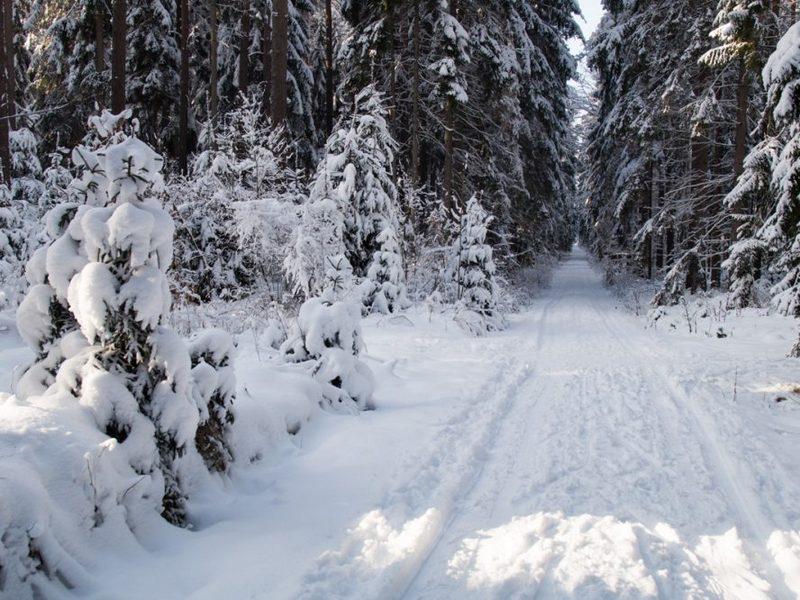Weihnachtliche Winterwald-Geschichten