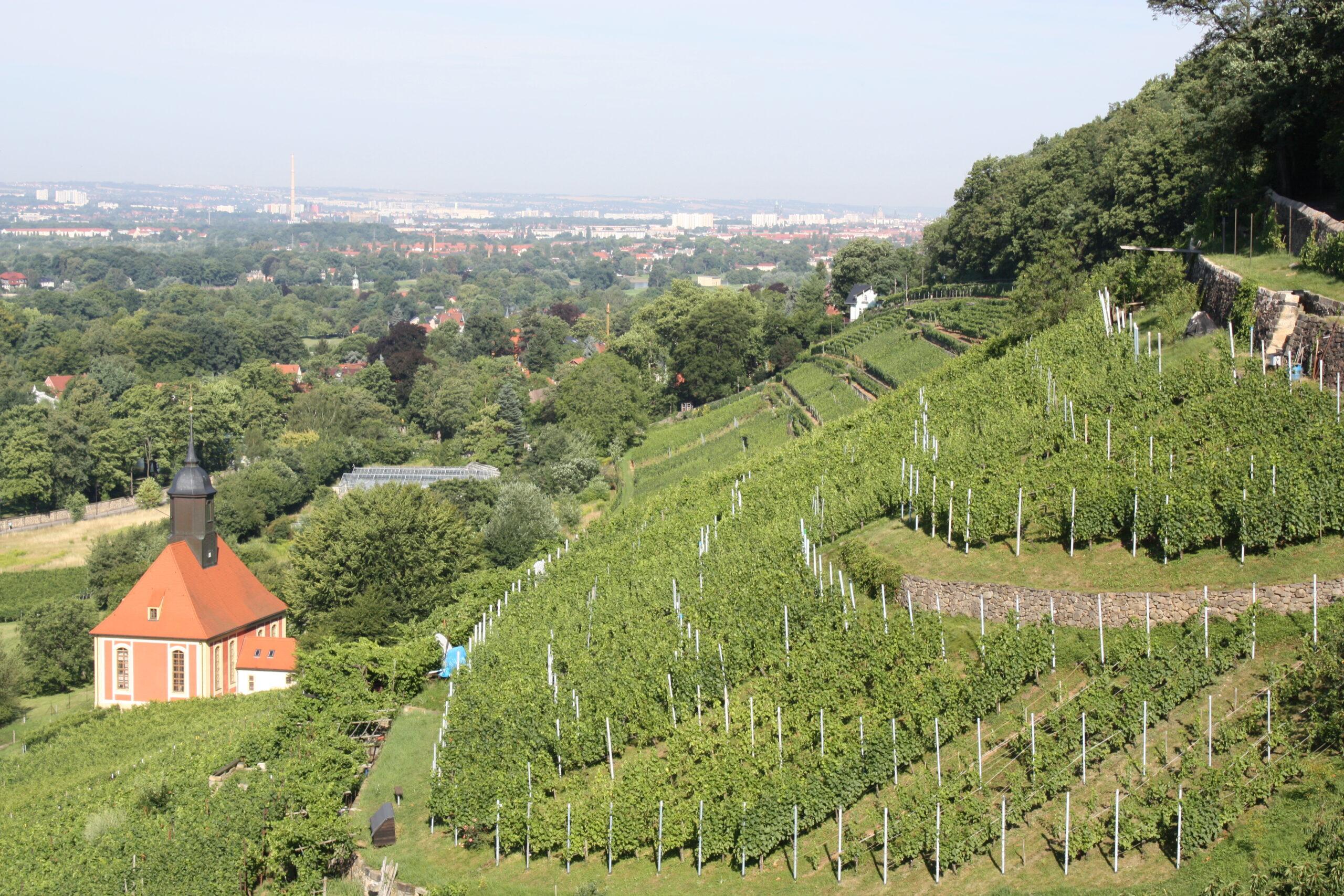 WeinWanderung Pillnitz