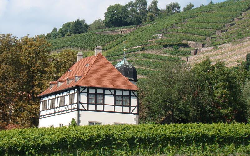 Weinwanderung durch die Niederlößnitz